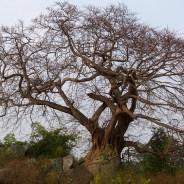 По дороге из Таптапани в Чандрагири (с)inditrip.net