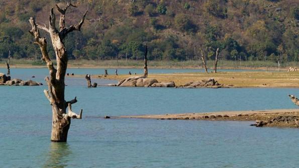 Озеро Чилка неподалеку от Рамбхи. Индия, Орисса (c)inditrip.net