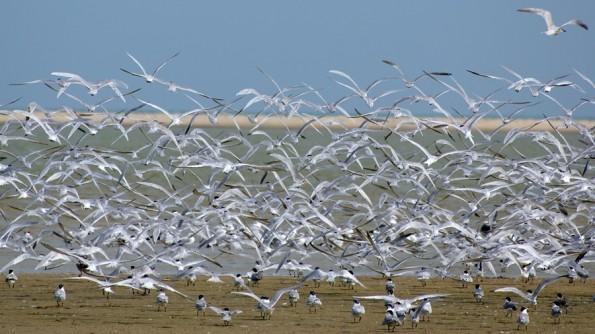 Птицы на озере Чилка. Индия, Орисса (c)inditrip.net