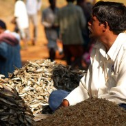 Dried fish and lake shrimps at Kunduli weekly haat. India. Orissa (c)inditrip.net