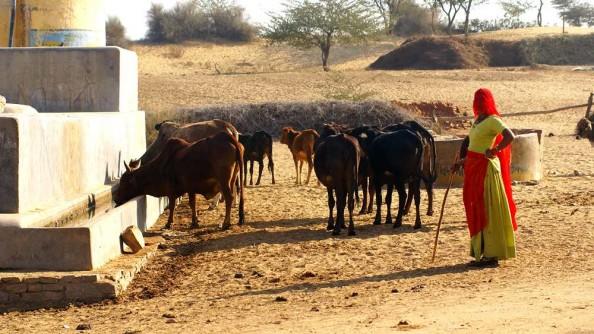 Thar Desert villge. Jaisalmer. Rajasthan. India. (c)inditrip.net